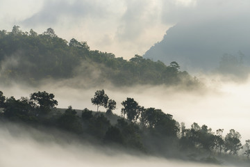 A high hill forest in foggy atmosphere Fototapete