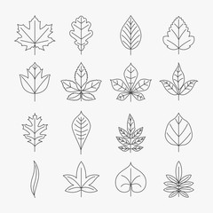 Wall Mural - Leaf line icons vector set