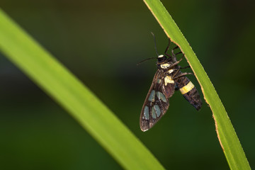 Insect on leaf in garden green background