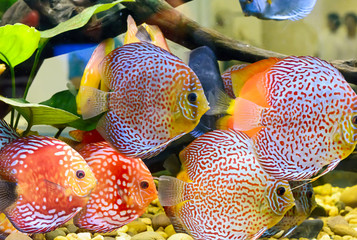 The fish in the cabinet, bright colors.