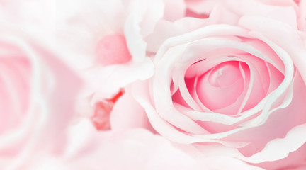 Beautiful Rose close up for background , soft focus background.