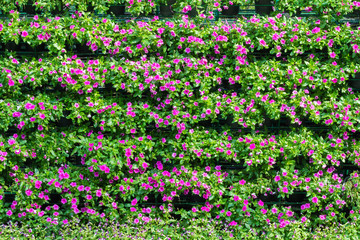 Flower leaf bushes green fence
