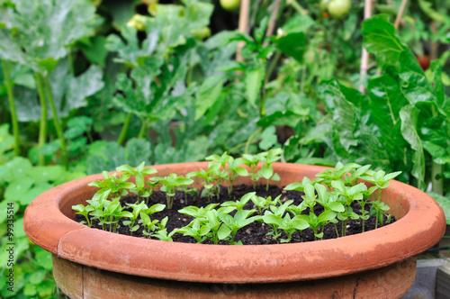 """semis dans pot en terre cuite dans jardin "" Imagens e ..."