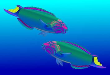 Beautiful Parrotfish on blue background