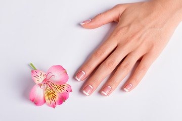 Fototapete - Gentle pink freesia with franch manicure.