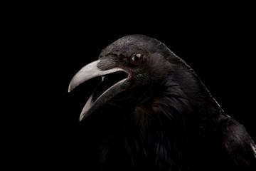 Wall Mural - Black crow in black