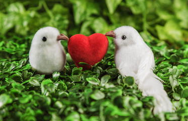 The concept of Valentine's Day two little white bird the lovers, heart on the background of nature.