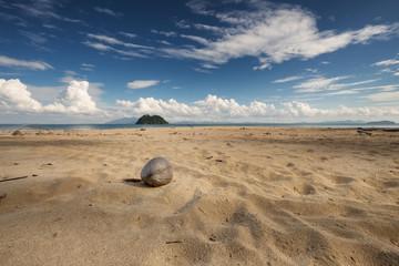 Coconut at the sea sand beach