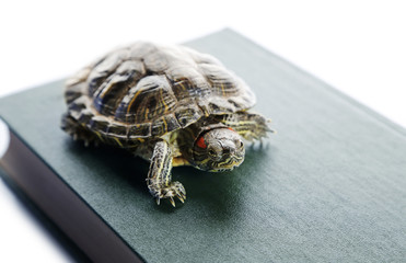 Turtle on the book against white background, close up