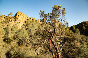 Pinnacles National Park california high peaks hiking trail