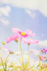 Soft focus cosmos flower on vintage pastel background