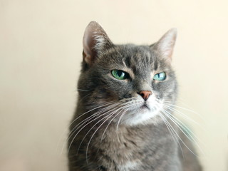 contempt emotion in cats eyes
