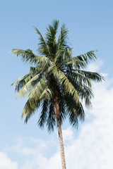 coconut tree on sky