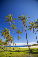 palms on the beach of Easter Island.