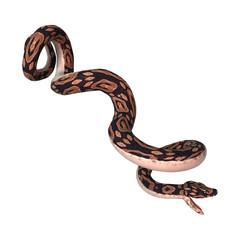 Ball Python on White