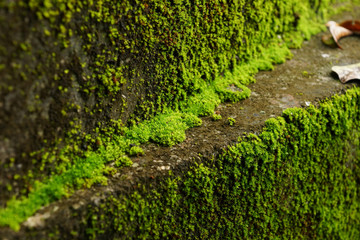 Green moss on the old stairs.
