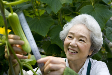 Senior woman examining a vegetable plant