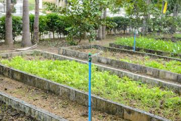 Sprinkler, Garden irrigation system watering lawn.