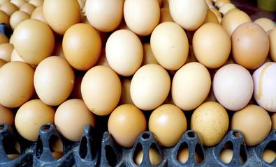 fresh eggs in Farmer market
