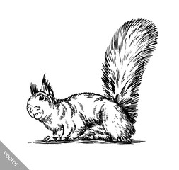 black and white engrave isolated squirrel illustration
