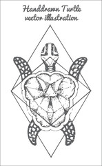 hand drawn illustration of turtle