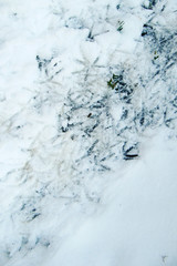 Bodenfrost