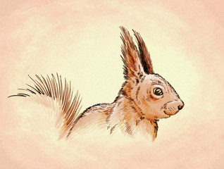 color engrave isolated squirrel illustration