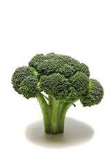 Healthy Broccoli/ Vertical shot of fresh broccoli with shadow on white background