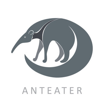 Anteater. Vector illustration.