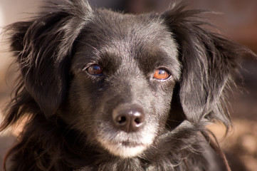 The dog eyes.