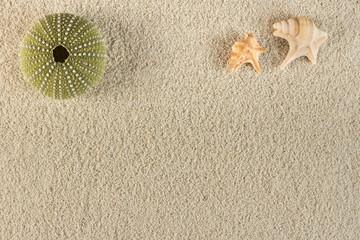 urchin on sand