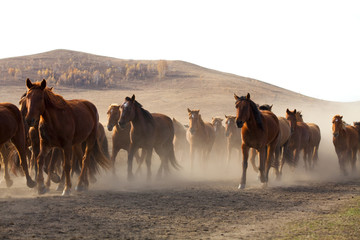 A herd of horses running in Inner Mongolia