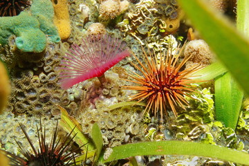 Sea life on the seabed urchin with worm