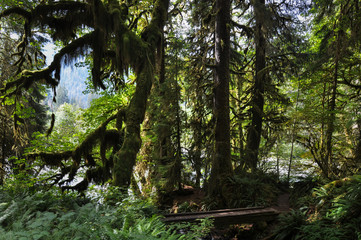 Fototapete - Olympic National Park, Washington, USA