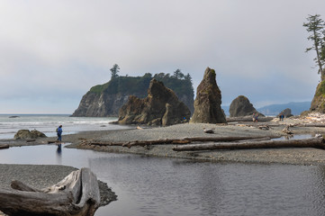 Fototapete - Pacific Coast, Olympic National Park, Washington, USA