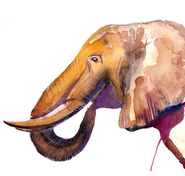 the elephant watercolor hand drawn isolated on the white background