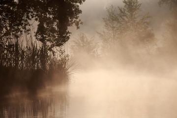 Keuken foto achterwand Bos in mist Gräser und Bäume am See