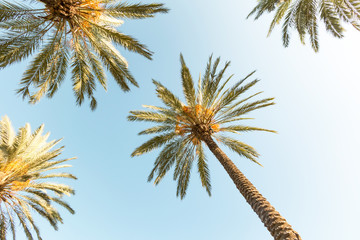 Palm trees from a different angle