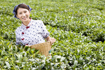Young Woman in a Tea Field