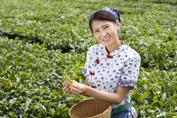 Young Woman in a Tea Field Holding Fresh Tea Leaves