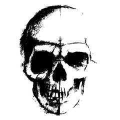Skull sketch element