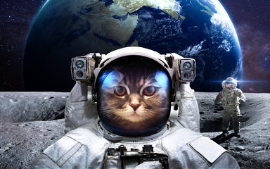 Wall Murals Nasa Brave cat astronaut at the spacewalk. This image elements furnished by NASA.