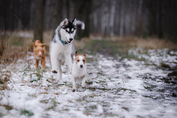 Dogs walk in the park in winter