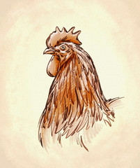 color engrave isolated chicken illustration