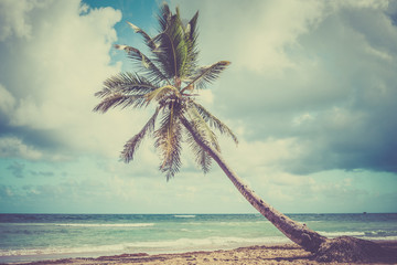 Palm tree on Caribbean coast
