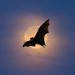 Bats flying at night