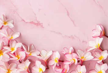 pink plumeria background and space
