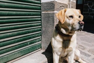Dog in the Street Enjoying the Sun Rays