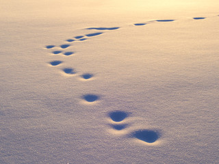 Animal tracks in snow, natural background
