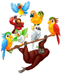 Chimpanzee and many birds on the branch
